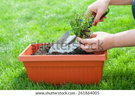 Woman planted a flower  in a pot. Woman holding a garden shovel and a flower with root. - stock photo