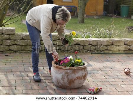 woman planting flowers in a terracotta flowerpot. - stock photo
