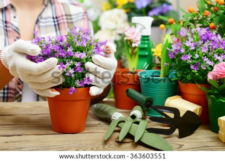 woman planting flowers in pots, close-up hands.