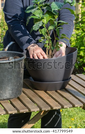 woman planting flowers. Selective focus. - stock photo