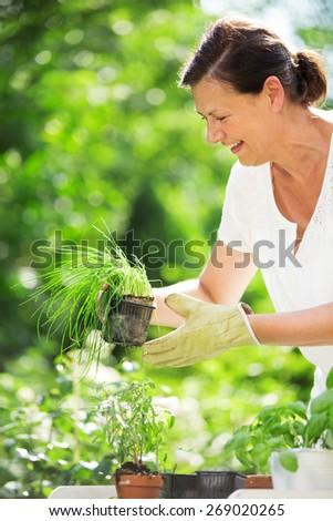 Woman planting herbs in garden - stock photo