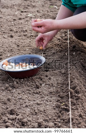 Woman planting onion - stock photo