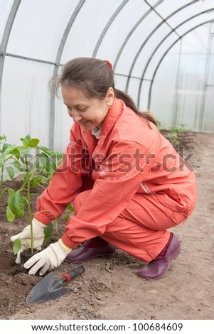 woman planting pepper seedlings in hothouse - stock photo
