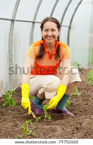 woman planting tomato seedling in hothouse - stock photo