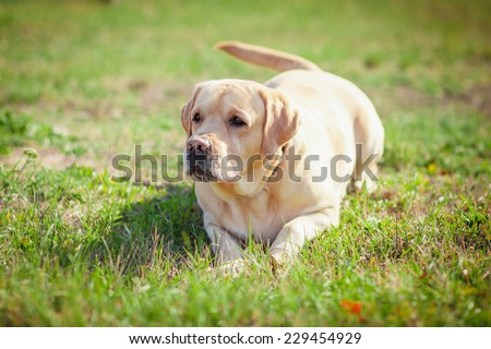 Woman playing with dog  - stock photo