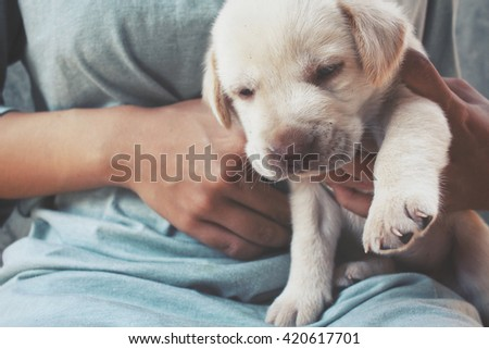 Woman playing with her labrador puppy dog - stock photo