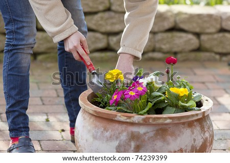 woman preparing flowers for planting in a terracotta flowerpot. - stock photo