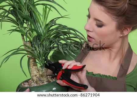 Woman pruning a houseplant - stock photo