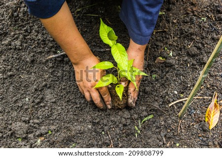 Woman puts a plant in the earth - stock photo