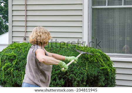 Woman Raking Clippings off Freshly Pruned Plant