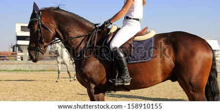 woman rider on the horse