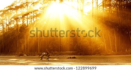 woman riding horse on the beach lit by sun beams - stock photo