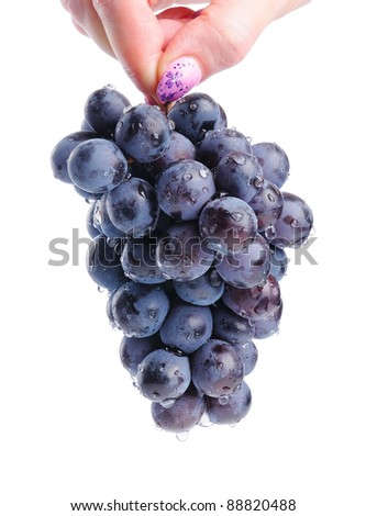 Woman's hand holding a branch of grapes with water drops, isolated - stock photo