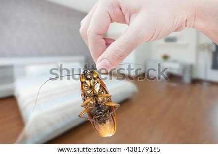 Woman's Hand holding cockroach on bedroom background, eliminate cockroach in bedroom - stock photo