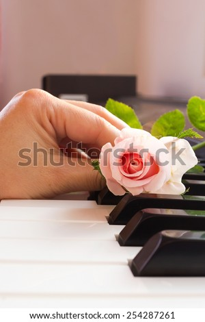 Woman's hand put a pink rose on piano keyboard. - stock photo
