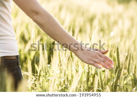Woman's hand touch wheat ears at sunset - stock photo