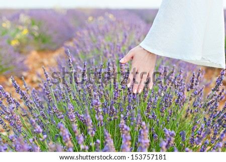 Woman's hand touching a growing crop purple lavender - stock photo