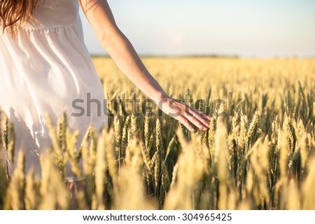 Woman's hand touching wheat ears at sunset - stock photo