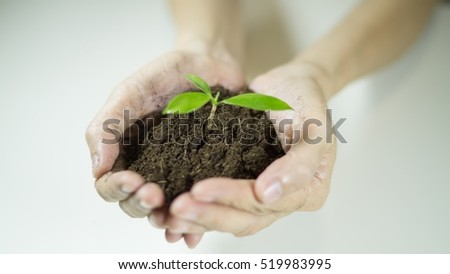 woman's hands holding a plant growing out of the ground, closeup.Green seedling growing from soil,Ecology concept., World Environment Day, Earth Day, World food day concept, New Life or csr activities