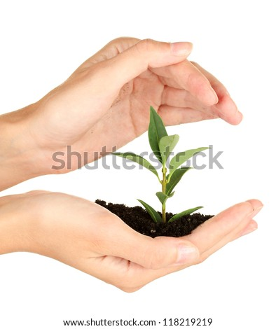 woman's hands holding a plant growing out of the ground, on white background close-up