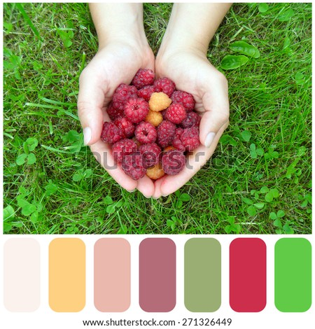 Woman's hands with a raspberry on a background of green grass, colour palette with color swatch - stock photo