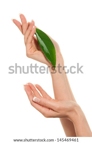 Woman's hands with leaf - stock photo