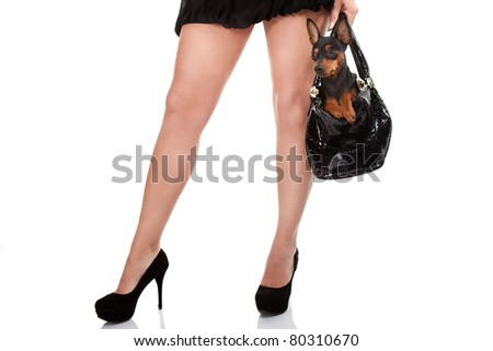 woman's legs with high heels and miniature  pinscher in handbag  over white background - stock photo