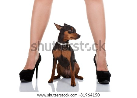 woman's sexy legs with miniature pincher, isolated on white background - stock photo