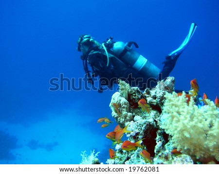 Woman scuba diver and fishes - stock photo