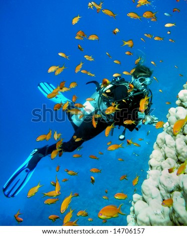 Woman Scuba Diver and school of Fish
