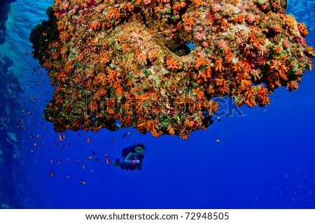 Woman scuba diver exploring reefs - a series of UNDERWATER IMAGES. - stock photo