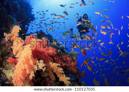 Woman Scuba Diver swims through tropical fish beside coral reef - stock photo