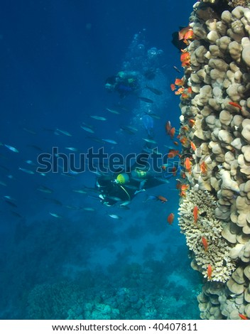 Woman Scuba Divers and school of Fish - stock photo