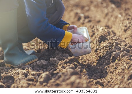 Woman seeding onions in organic vegetable garden, young adult female planting seeds in the arable soil. - stock photo