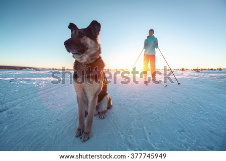 Woman skiing in a winter field with the dog. Focus on the dog - stock photo