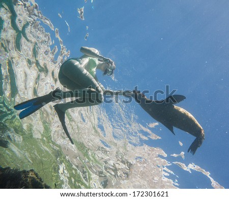 Woman snorkelling with a sea lion pup - stock photo