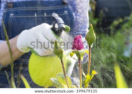 Woman spraying flowers in the garden - stock photo