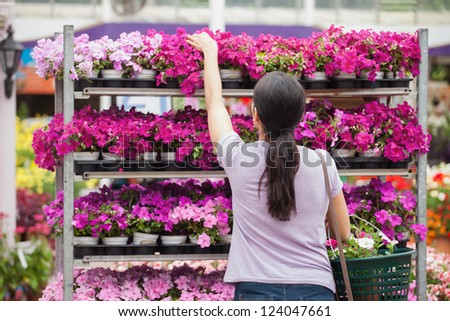 Woman taking a plant from the shelves - stock photo