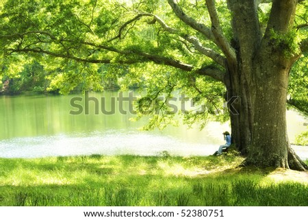 Woman taking picture under oak tree in glow of afternoon sun in soft focus - stock photo