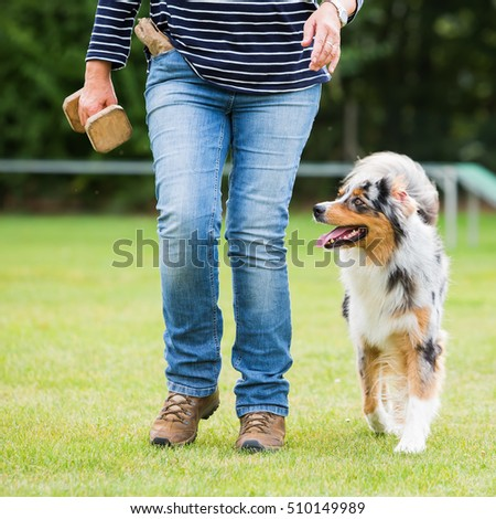 woman trains with an Australian Shepherd dog on a dog training field