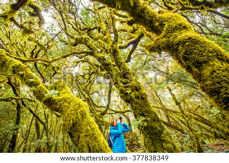 Woman traveling with backpack, photographing with photo camera beautiful evergreen forest in Garajonay park on La Gomera island on Canary island, in Spain. Wide angle shot with copy space - stock photo