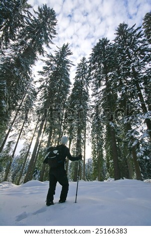 Woman trekking in winter in the forest - stock photo