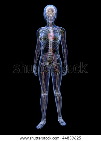 woman - vascular system - stock photo