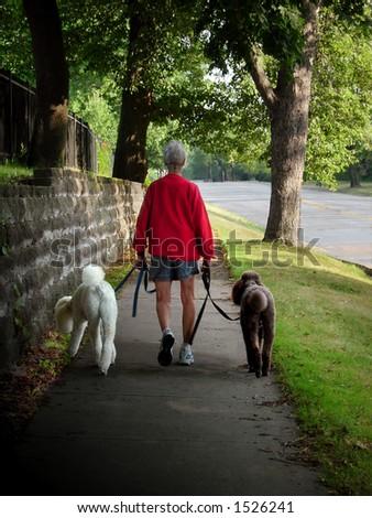Woman walking poodles - stock photo