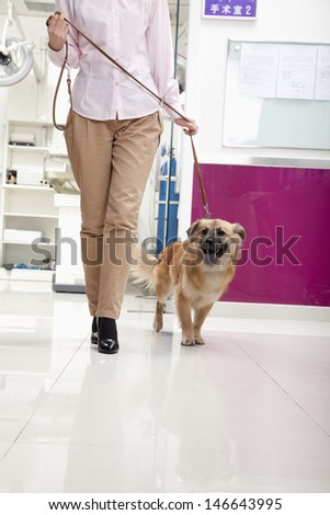Woman walking with dog in veterinarian's office - stock photo