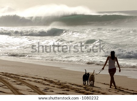 Woman walks her dog on beach at Bonzai Pipeline off of Oahu's North Shore. (image contains noise) - stock photo