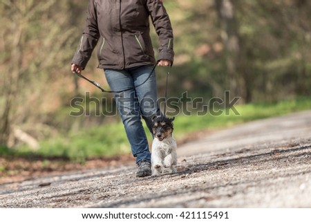 woman walks with a dog on a leash - jack russell terrier