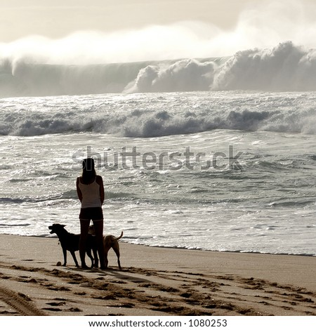 Woman watches surfers with her dogs on beach at Bonzai Pipeline off of Oahu's North Shore. (image contains noise) - stock photo