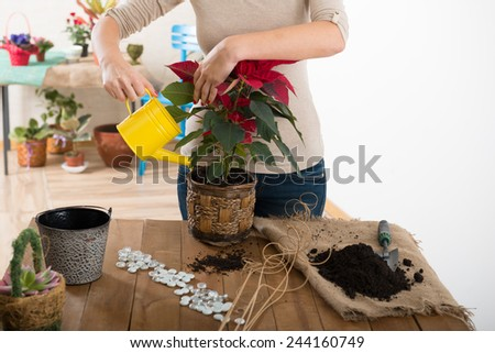 Woman watering a flower - stock photo