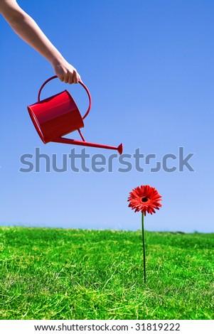 Woman watering flower - stock photo